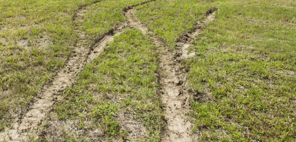 Muddy Lawn